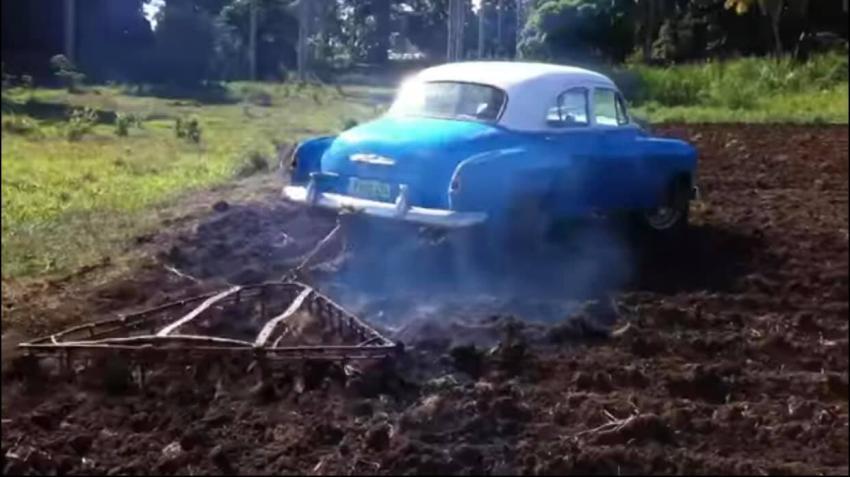 Utilizan Almendrón en Cuba para arar la tierra