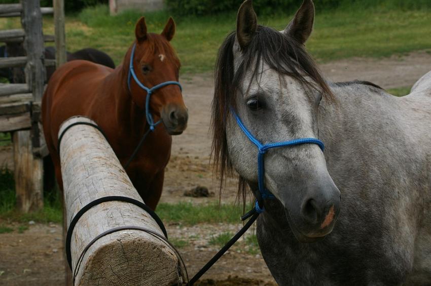 Sheriff de Florida advierte sobre aumento de robos de caballos sacrificados por su carne