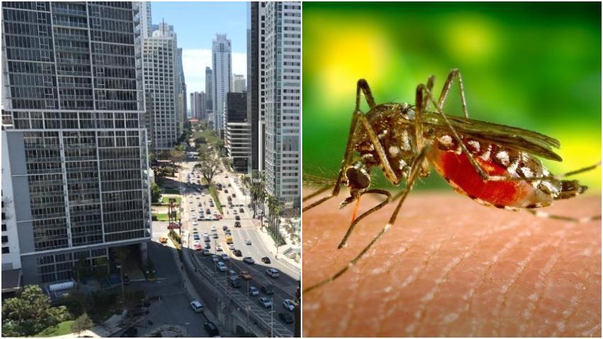 Confirmados 14 casos de dengue en Miami-Dade este año