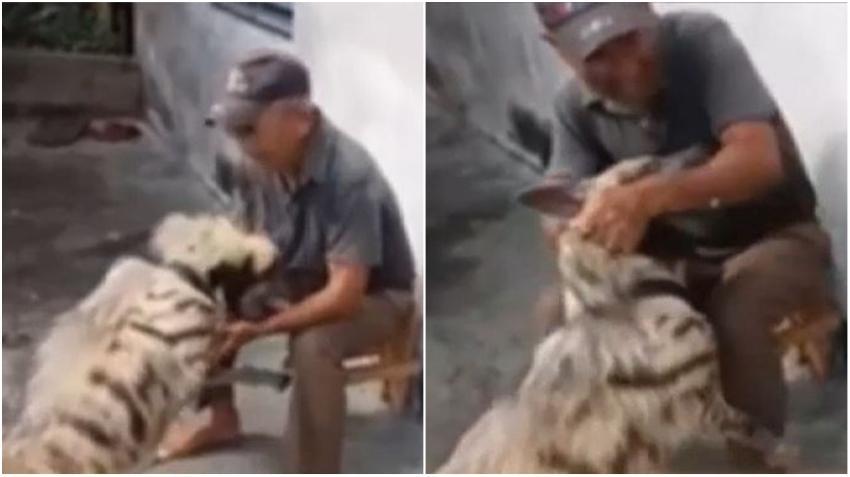 Hombre cubano tiene en casa una hiena como mascota