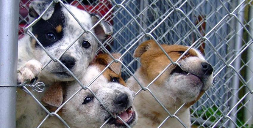 Organizan en Miami evento de adopción gratuita de mascotas para este domingo en el Doral