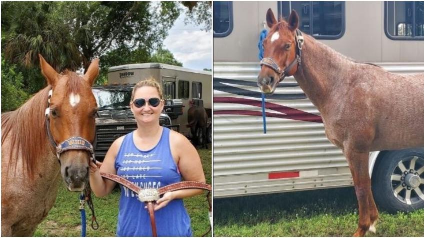 Una familia de Florida encuentra a uno de sus caballos asesinado, aparentemente para llevarse su carne