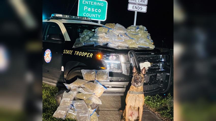 Arrestan en Florida a dos hispanos que llevaban 25 libras de marihuana en el asiento trasero de su vehículo
