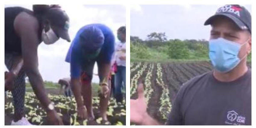 """Los CDR advierten """"se avecinan tiempos difíciles"""" e instan a los cubanos a producir sus alimentos en cualquier lugar"""