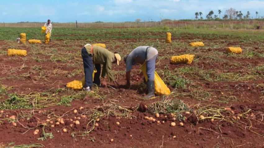 Millonario proyecto de la FAO y el Gobierno cubano beneficiaría a comunidades vulnerables en tres provincias de la Isla
