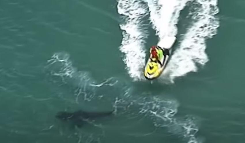 Enorme tiburón blanco de 10 pies mata de una mordida a un surfista australiano