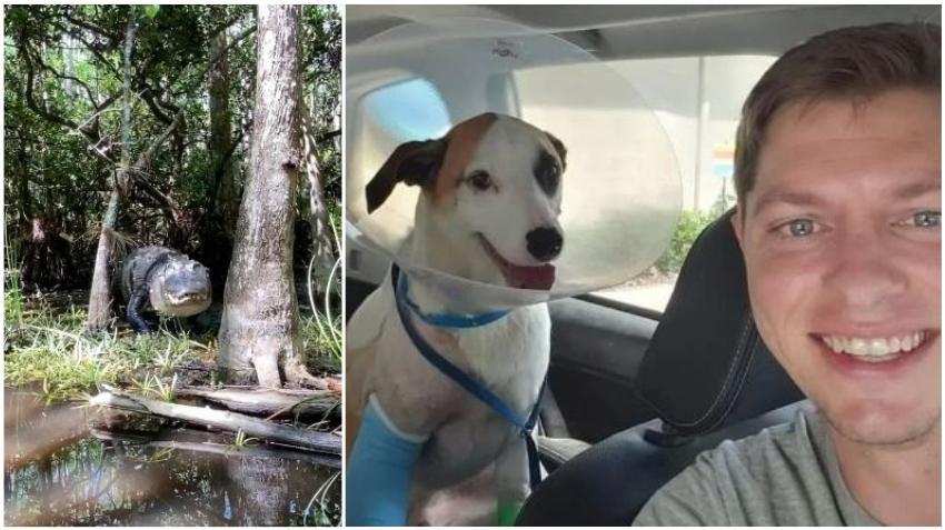 Un hombre de Florida se lanza a puñetazos contra un caimán para salvar la vida de su perro