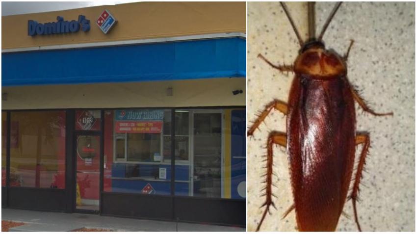Un Outback Steakhouse, Domino's Pizza y un Taco Joint en el sur de Florida son cerrados temporalmente por cucarachas y falta de higiene