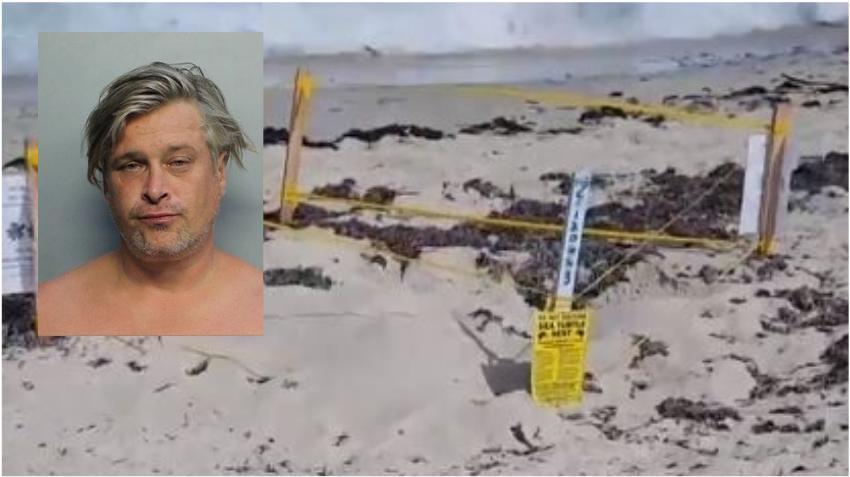 Hombre arrestado por molestar los nidos de tortuga marina en Miami Beach