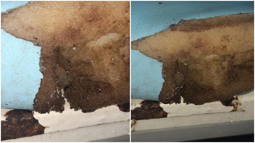 Salen gusanos de una camilla en el hospital Calixto García en La Habana