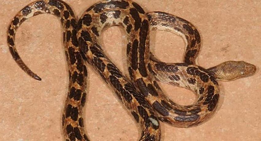 Hallan nueva especie de serpiente en el oriente de Cuba