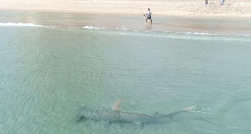Video capta inmenso tiburón martillo cerca de una playa en Florida