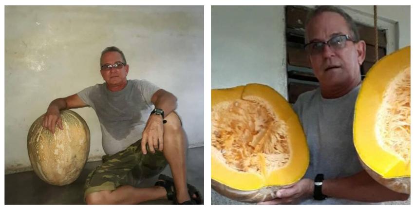 Calabaza gigante de 45 libras sorprende a pobladores de Los Arabos, Matanzas