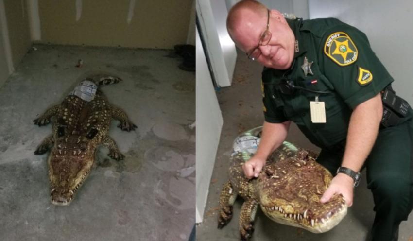 """Oficial de la policía de Florida responde a una llamada sobre un """"enorme caimán"""" que resultó ser un flotador inflable"""