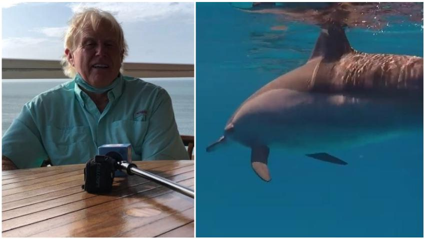 Un hombre dice que fue atacado por un delfín en una playa de Florida