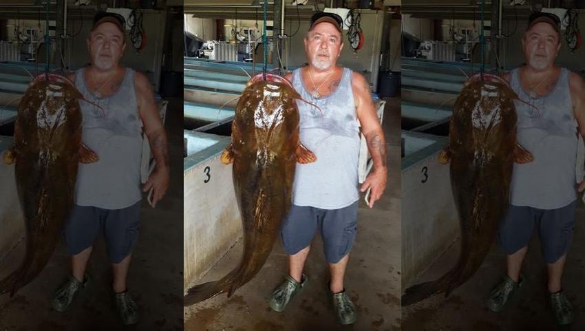 Pescador de Florida captura gigantesco pez gato de 70 libras y establece nuevo récord en el estado
