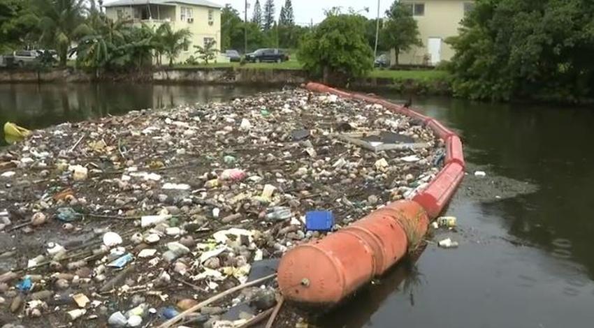 Aparecen más peces muertos en la Bahía de Biscayne en Miami Dade debido a la contaminación en vías fluviales