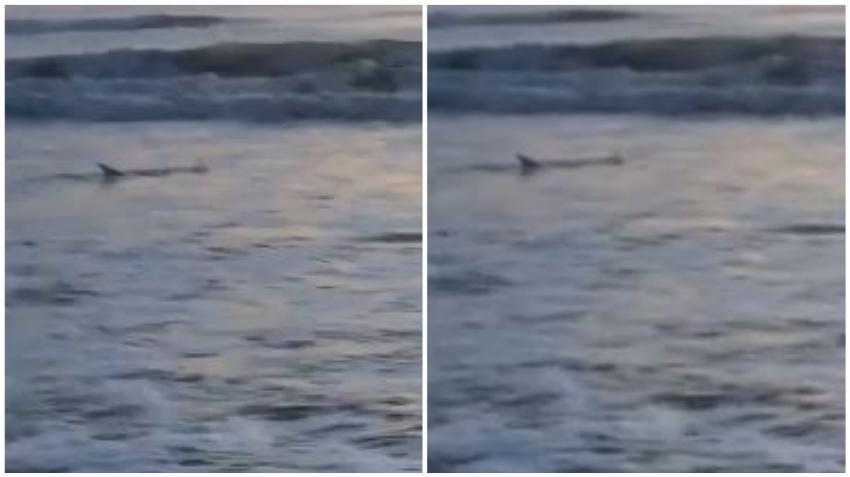 Captan en cámara a tiburón cerca de la costa en una playa de Florida