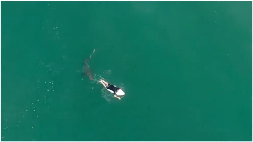 Captan con un drone lo cerca que estuvo un surfista de ser atacado por un tiburón
