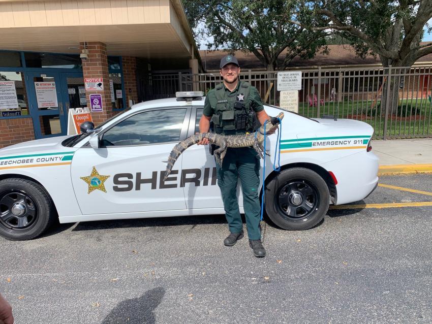 Policía de Florida encuentra cocodrilo deambulando por una escuela primaria