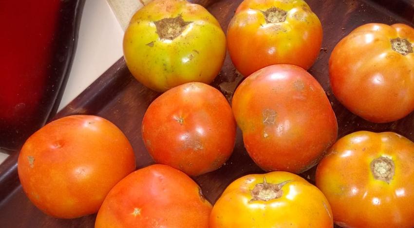 Periodista oficialista critica el precio de los tomates en el agro, pero no habla del abuso en las tiendas en dólares
