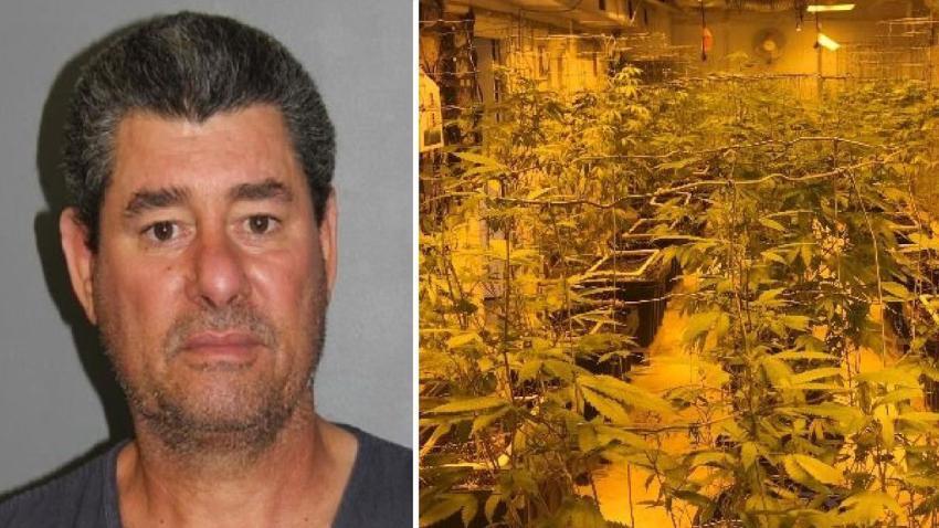 Una denuncia lleva a la policía a encontrar un cultivo ilegal de marihuana en la casa de un cubano en Colorado