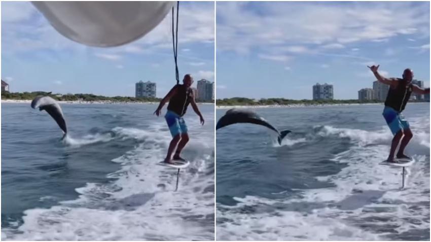Captado en cámara un delfín salta junto a surfista en la playa de Naples, Florida