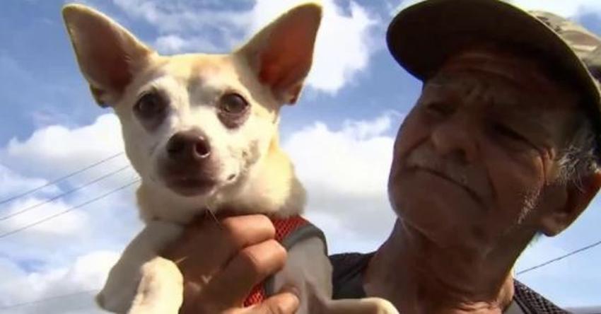 Devuelven perrito robado a un hombre sin hogar de Miami Lakes