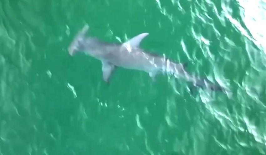 Florida tuvo el mayor número de ataques de tiburones en el 2020