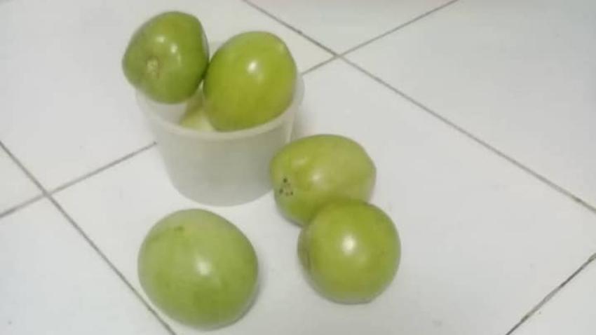 """""""Desabastecimiento y hambre en Cuba"""": 35 pesos la libra de tomates"""