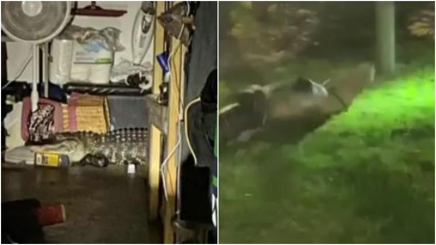 Una mujer en el Sur de la Florida encuentra un caiman en el garaje de su casa