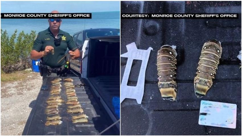 Multan a dos hombres en los Cayos de la Florida por pesca ilegal de langostas