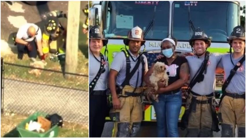 Bomberos de Miami rescatan y reviven a un perro que quedó inconsciente atrapado en un incendio en una casa