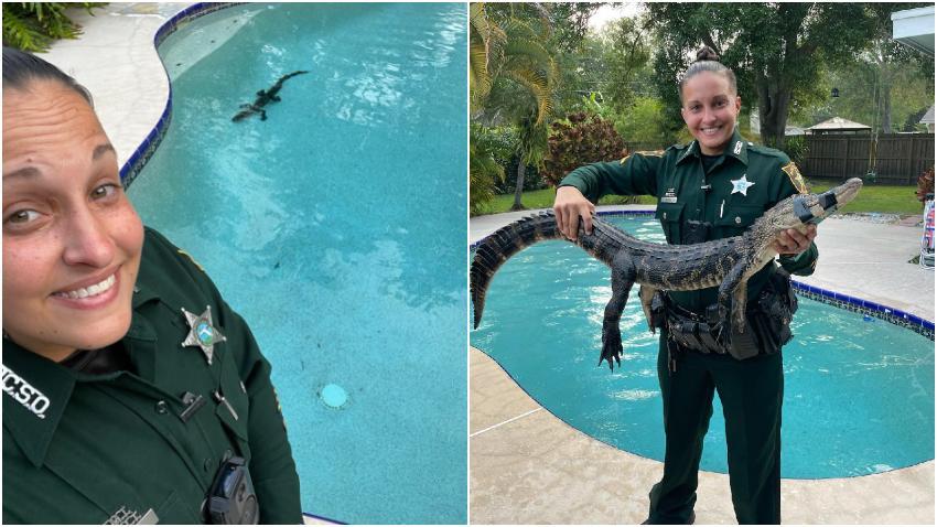 Policía saca a un caimán de la piscina de una casa en Florida