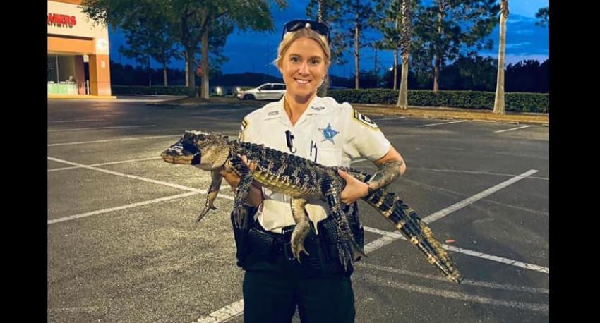 Caimán se pasea por el estacionamiento de un centro comercial en Florida