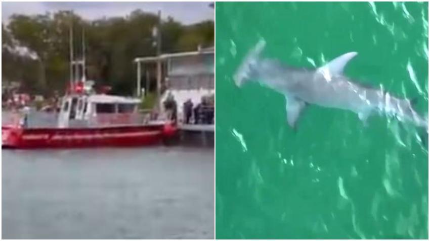Hombre trasladado de urgencia al hospital por un ataque de tiburón cerca de Key Biscayne
