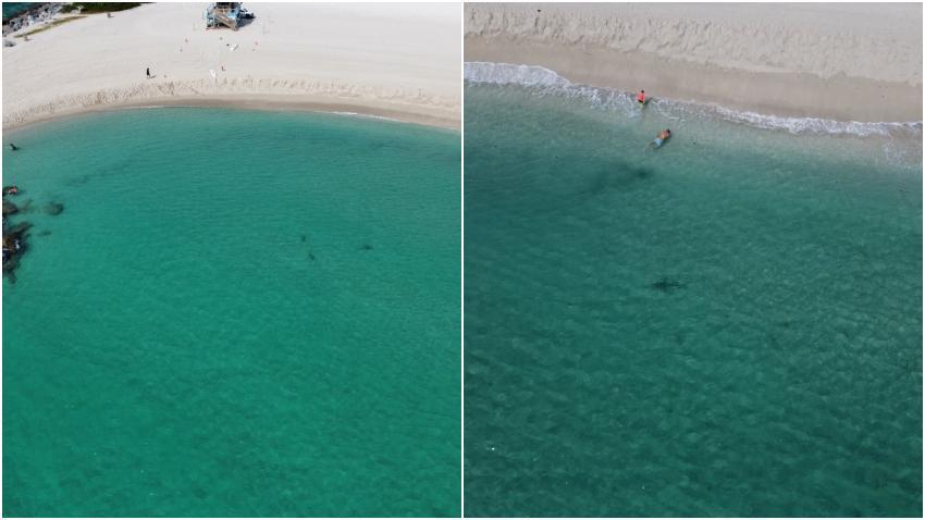 Departamento de Bomberos de Miami-Dade publican imágenes de tiburones muy cerca de bañistas en la playa