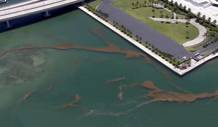 Advertencia de no nadar para algunas zonas de la Bahía de Biscayne por derrame de aguas residuales