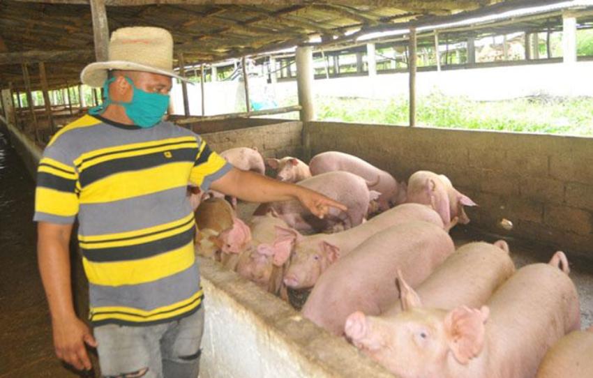El régimen ofertará pienso para la cría de animales en las tiendas en MLC