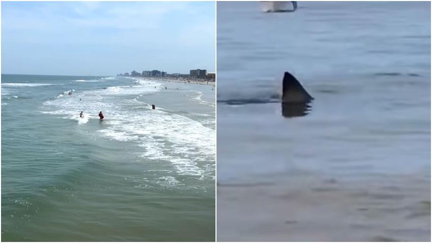 Tiburón muerde a una joven turista de 21 años en una playa de Florida