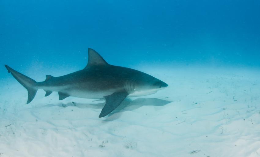 Fotógrafo tiene encuentro cercano con inmenso tiburón  cerca de la costa en el Sur de la Florida