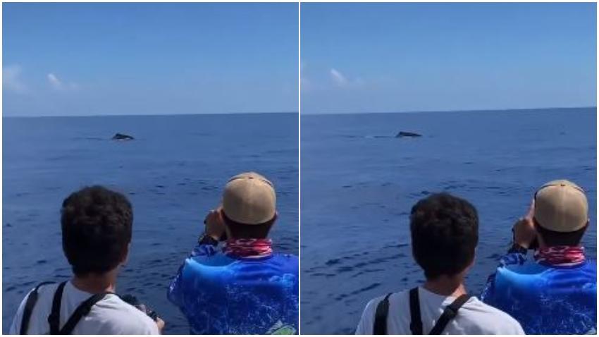 Avistan ballena cerca de las costas de Miami