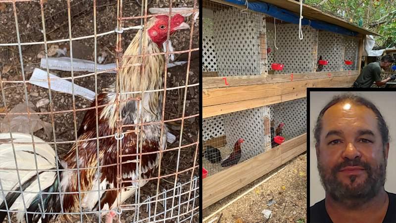 Hombre de los Cayos de Florida arrestado por dirigir  operación de pelea de gallos
