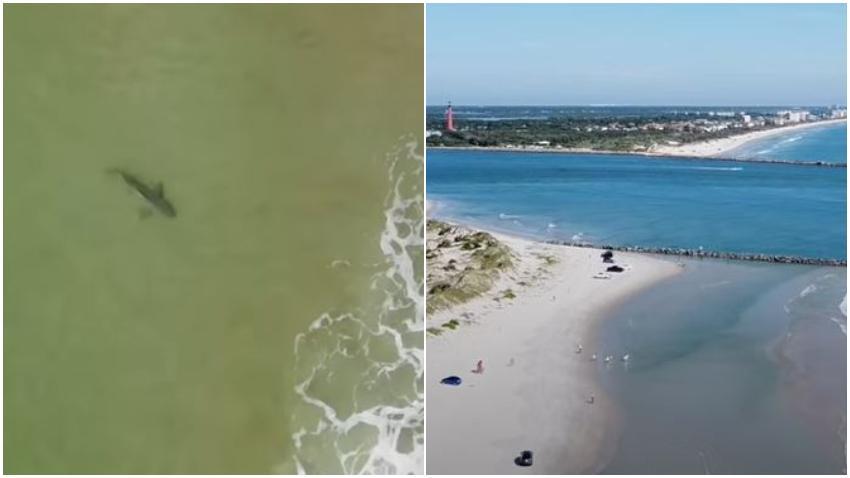 Niño de 12 años atacado por un tiburón en playa del condado Volusia en Florida