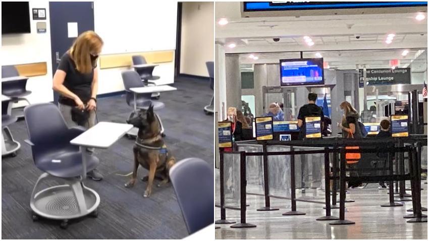 Aeropuerto de Miami utilizará perros para detectar casos de Covid en los empleados